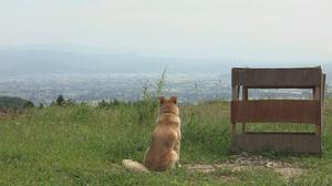 犬と猫と人間と2動物たちの大震災main.jpg