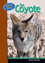 The Coyote (Nature Walk)