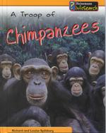A Troop of Chimpanzees (Animal Groups)