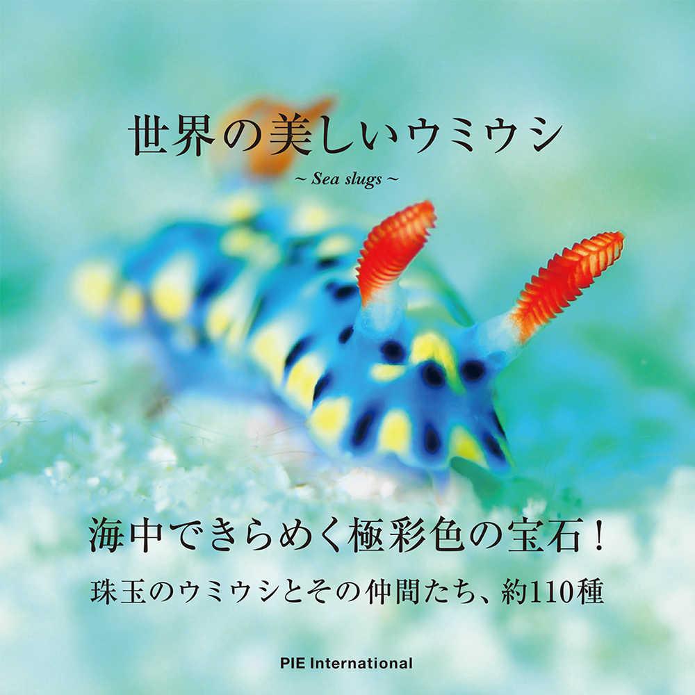 ウミウシの画像 p1_26